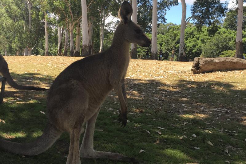 Unique experiences in Australia